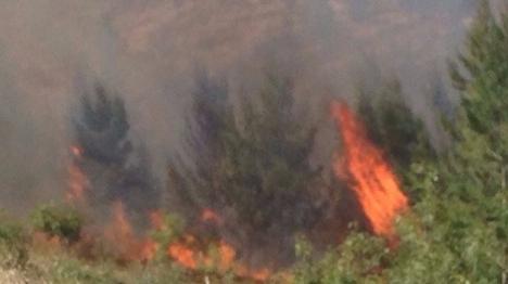 כ-150 עצים הוצתו סמוך לכפר בגוש עציון