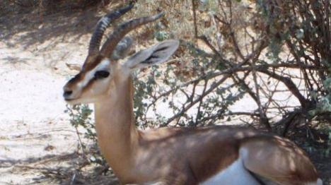 """ערבים צדים חיות מוגנות ביו""""ש ללא אכיפה"""