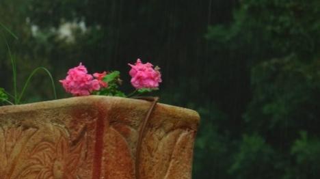 מזג אוויר הפכפך: טפטופי גשם ועומסי חום
