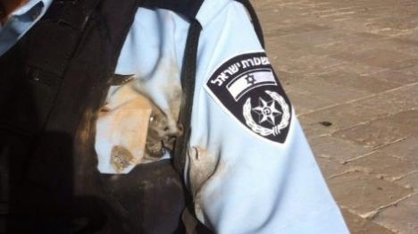 שוטר שנפגע הבוקר מזיקוק בהר הבית (דוברות המשטרה)