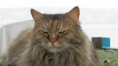 דרושים: בעלי חתולים למחקר מדעי-הלכתי
