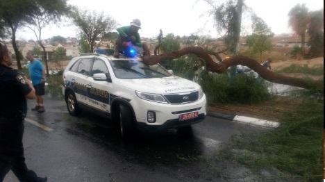 עץ שקרס על רכב. ארכיון (דוברות משטרת אילת)