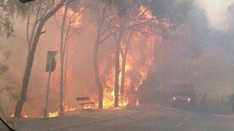 רובן המוחלט של השריפות, כתוצאה מהצתה