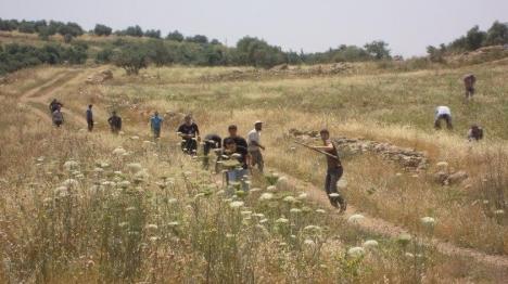 הותקפו ערבים שחדרו לשטחים הסמוכים לחוות גלעד