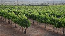 אישום: ערבי סחט באיומים חקלאים אצלם עבד
