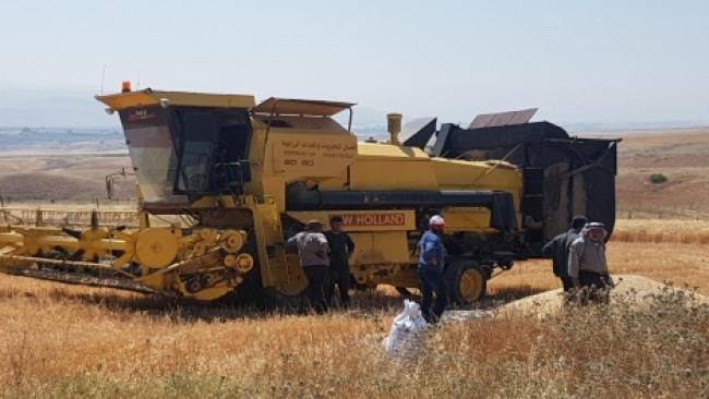 קציר קטלני: ערבים משתלטים על שדות מוקשים